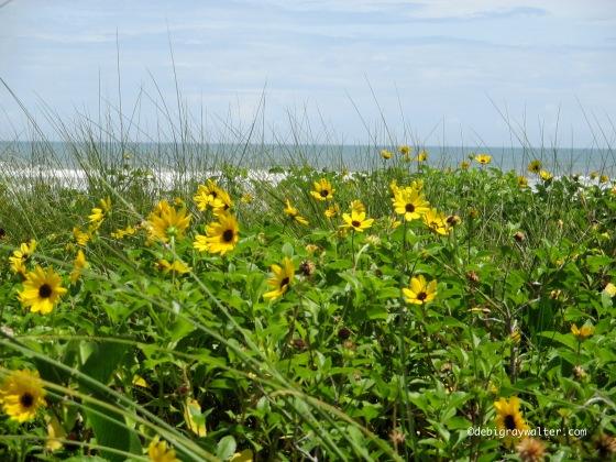 Ormond beach